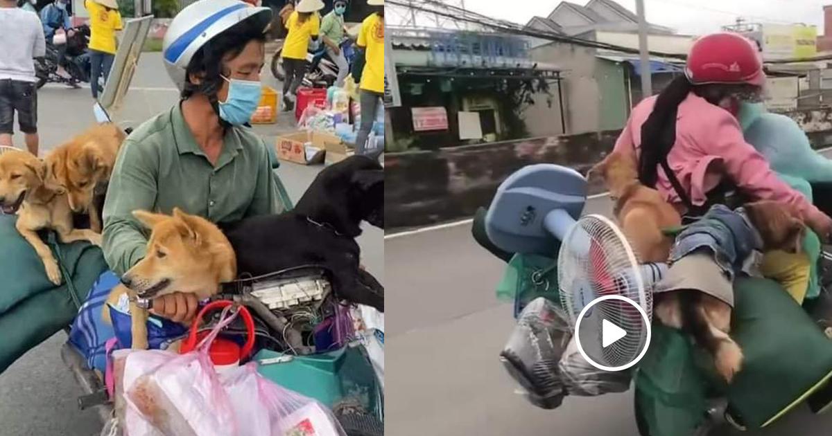 """Cộng đồng mạng """"sôi sục"""" thông tin 15 chú chó ở Cà Mau bị tiêu hủy"""