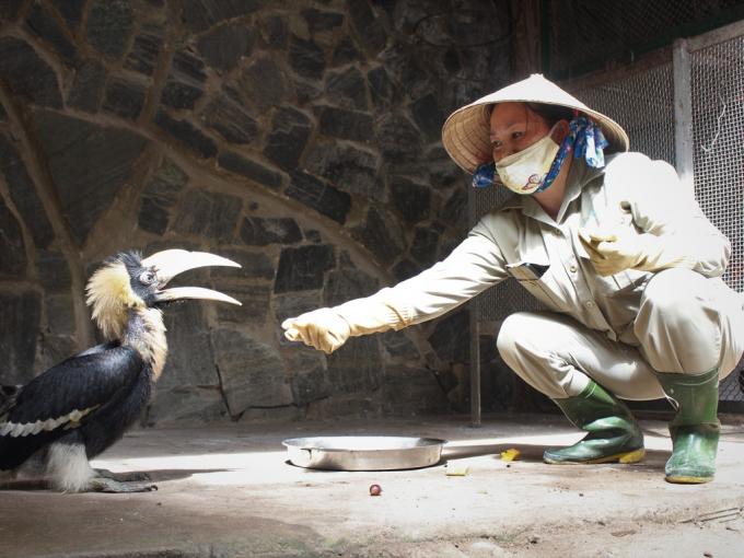 Sau 2 ngày kêu gọi, giám đốc Thảo Cầm Viên cảm kích CĐM đã cứu lấy bầy thú